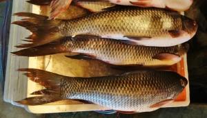 how to debone rohu fish