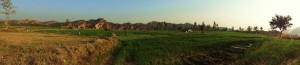 Fields at Aasrewali
