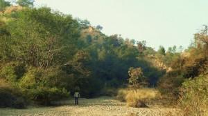 Hunt for pugmarks, Aasrewali