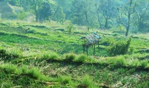 Terraced fields, Rasoon