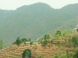 Dagrana, Thapli panchayat
