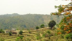Dhani near Chhooyi, Bhoj Jabyal