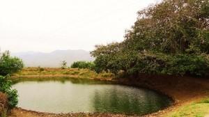 Village pond, Chaudhry-ka-Vas