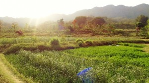Fields of Kadiyani