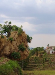 Straw heaps at Kohlan