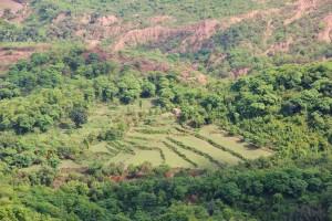 Terraced fields of Kadiyani