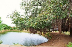 Pond at Chaudhury-ka-vas