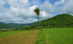 Fields at Chandi-ka-vas