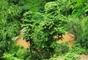 Water Harvesting Dam, Thalapur
