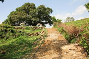 The track by the banyan