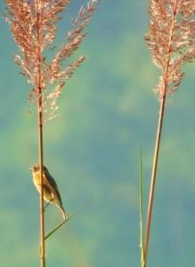 A bush bird, Mundal valley
