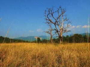 Golden Grasslands on way to Mundal post