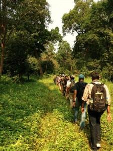 Jungle walk, Chilla forest range
