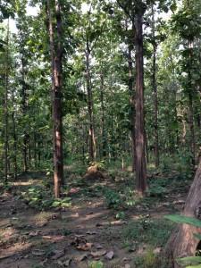 Sal Forest, Chilla forest range