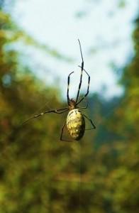 Spider at Benog