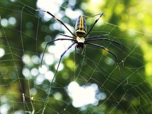 Spider at Laldhang