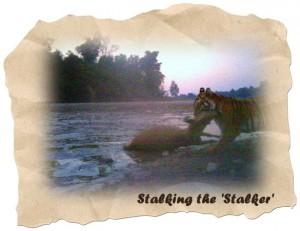 Stalking the Stalker, Rajaji National Park