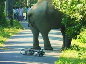 Tusker on road to Jhilmil Jheel