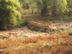 Bandh, Taroba-Andhari Tiger Reserve