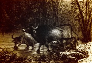 Gaur, India and its Native Princes, Louis Rousselet, 1876