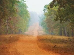 Scenic drive, Taroba-Andhari Tiger Reserve