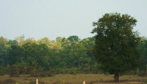 Taroba-Andhari Tiger Reserve- view from Moharli