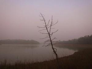 Teliya Lake, Taroba-Andhari Tiger Reserve