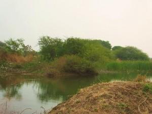 Village pond, Ramdegi, Taroba-Andhari Tiger Reserve