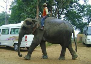 Elephant Safari at Dhikala