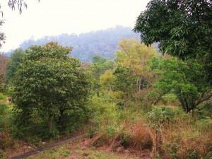 Forest around Sarpduli Forest Rest House