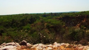 View from the ridge, Asola-Bhatti Wildlife Sanctuary
