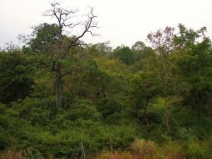 Thick forest around Sarpduli