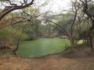 Water body near Karni Singh Shooting Range Gate, Asola-Bhatti Wildlife Sanctuary