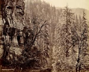 Narkunda Forest, Samuel Bourne (1865)