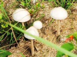 Wild mushrooms on the Karoh Peak