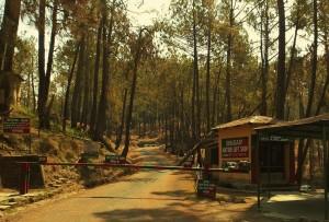 Drop Gate of Forest Department at Ayarpani, Binsar