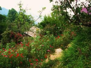 Flowers at Binsar Forest Retreat