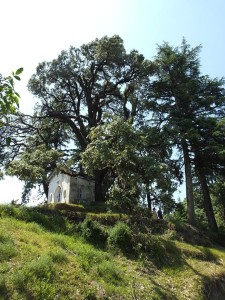 Ramsay's Chapel under the 'Grand Oak' Binsar