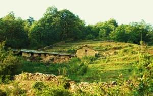 The Govan Estate, Binsar WLS