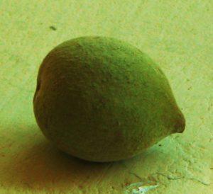 Bahera nut
